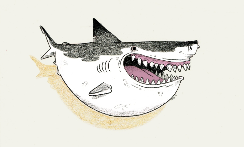 Big fan of sharks as you'll be slowly discovering, Plenty more to come.